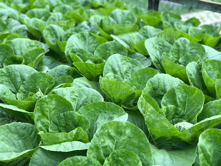 Vegetable types and their bioactives: growing the evidence for cardiovascular health benefits